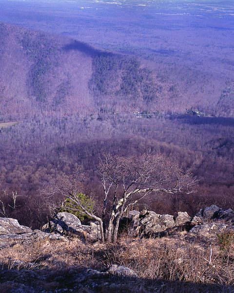 057-Blue_Ridge_D145244_Blue_Ridge_in_Early_Spring_057_Preview