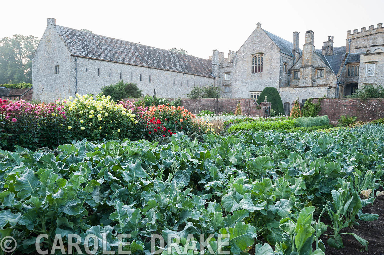 Kitchen garden full of rows of broccoli, cabbages and french beans with backdrop of historic Forde Abbey, nr Chard, Dorset, UK