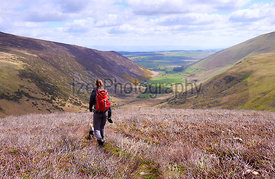 A hiker and their dog descending from Coomb Heights towards Mosedale and River Caldew in the English Lake District, UK.