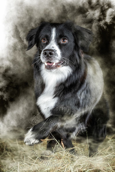 Art-Digital-Alain-Thimmesch-Chien-833