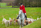 Neil Coleman with some of the Cottesmore Hounds