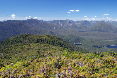 The wilderness of the Great Bear Rainforest in all its splendor, near Hartley Bay. In the foreground is a subalpine Yellow Ce...