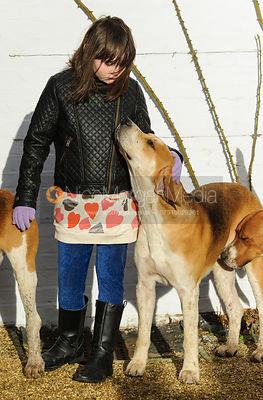 A young supporter meets the hounds - The Belvoir Hunt at Aswarby