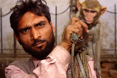 India - New Delhi - A man and his performing monkey