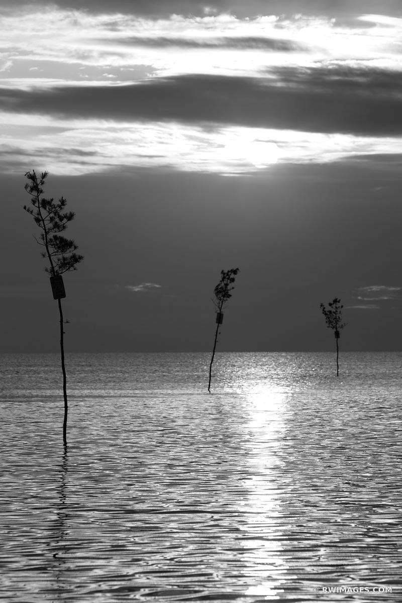CLAM TREES SUNSET ROCK HARBOR ORLEANS CAPE COD BLACK AND WHITE VERTICAL