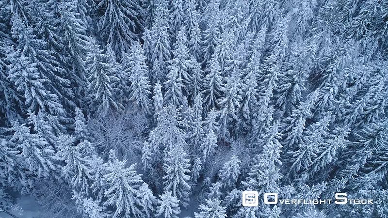 Aerial shot of a coniferous forest covered in snow, Akershus, Norway, January 2018.
