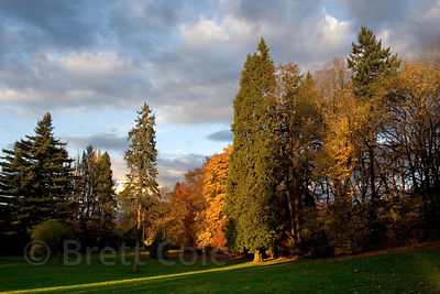 Tall trees is autumn in a city park in Eugene, Oregon