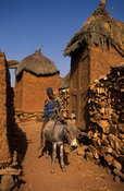 boy returning from the fields by donkey, alley between granaries, Songo, Dogon Country, Mali