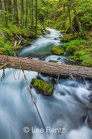 Royal Creek in Olympic National Forest