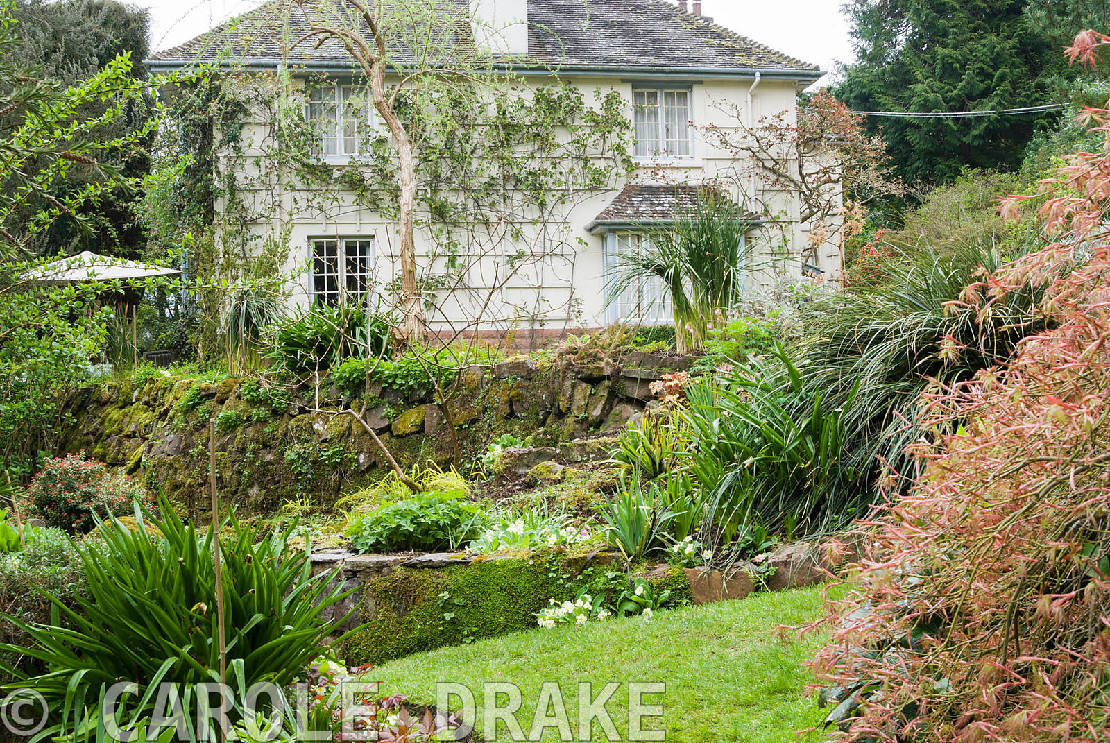 The house at Greencombe sits on a level terrace with slopes above and below. Greencombe Garden, Porlock, Somerset, UK