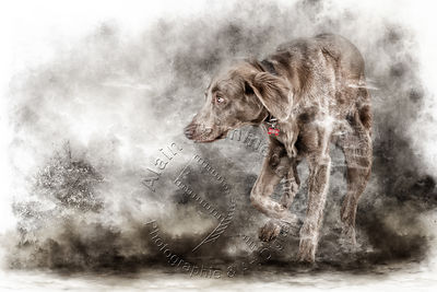 Art-Digital-Alain-Thimmesch-Chien-803