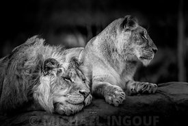 Beauval_ZOO_animaux_-25