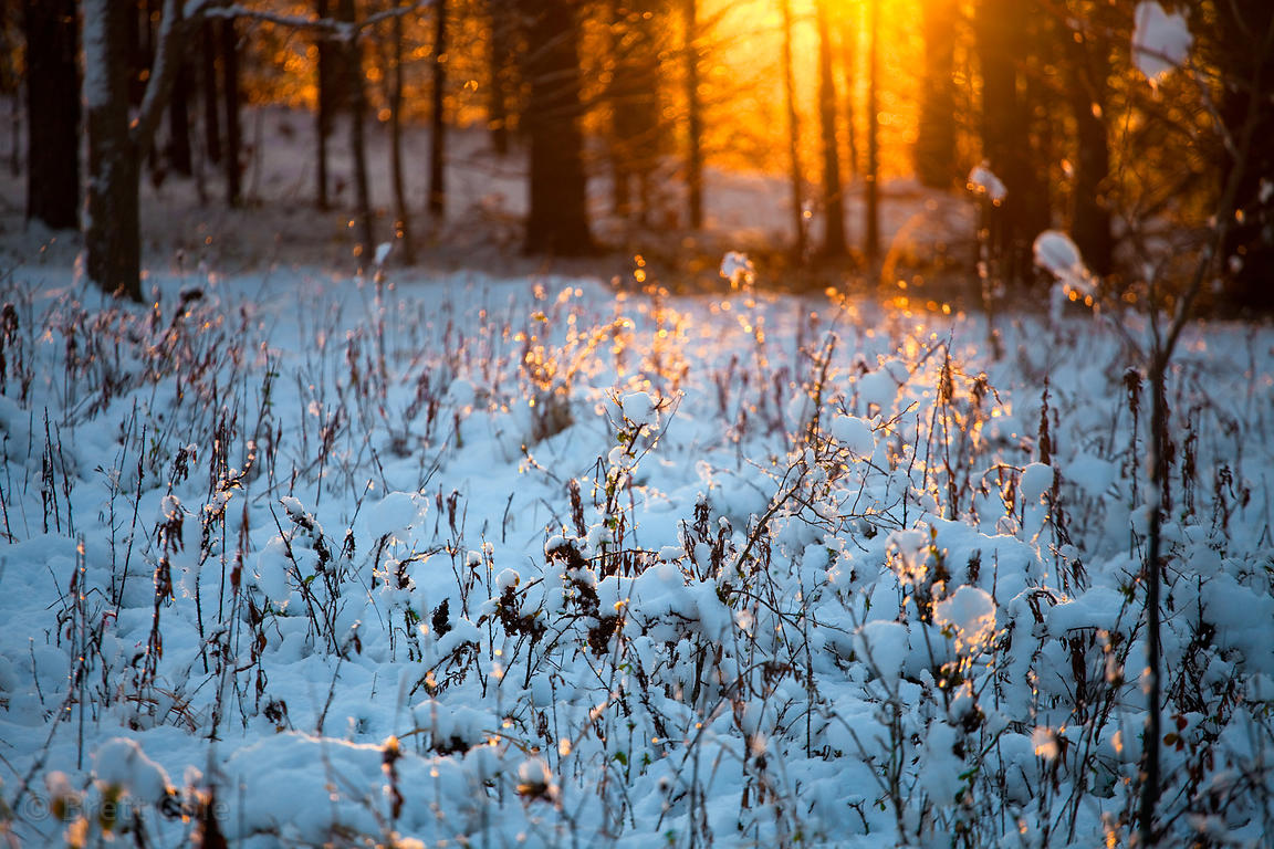 Sunrise in snow covered meadow, Green Farm Park, Maryland
