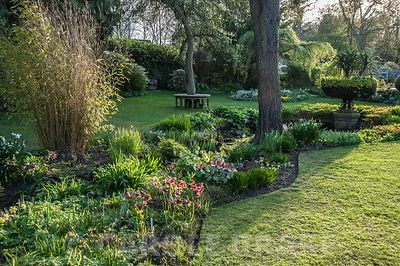 Undulating border in the Pond Garden contains hellebores, trilliums, ferns and sedges with hardy geraniums in the summer. Yor...