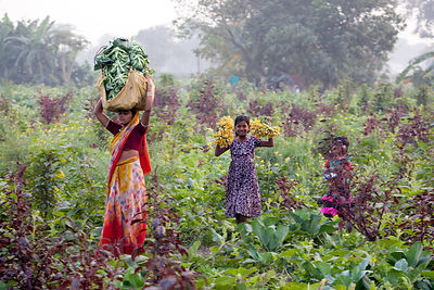 In a gorgeous and totally candid scene, a woman and her two daughters pick flowers on a farm in Dhapa, directly opposite the ...