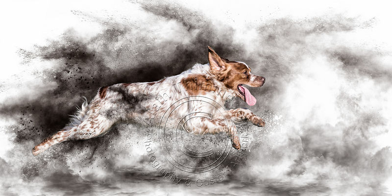 Art-Digital-Alain-Thimmesch-Chien-61