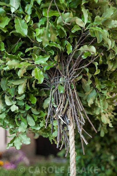 Swags of pittosporum are attached to a rope that forms the central core of the Christmas garland. Cotehele, St Dominick, nr S...