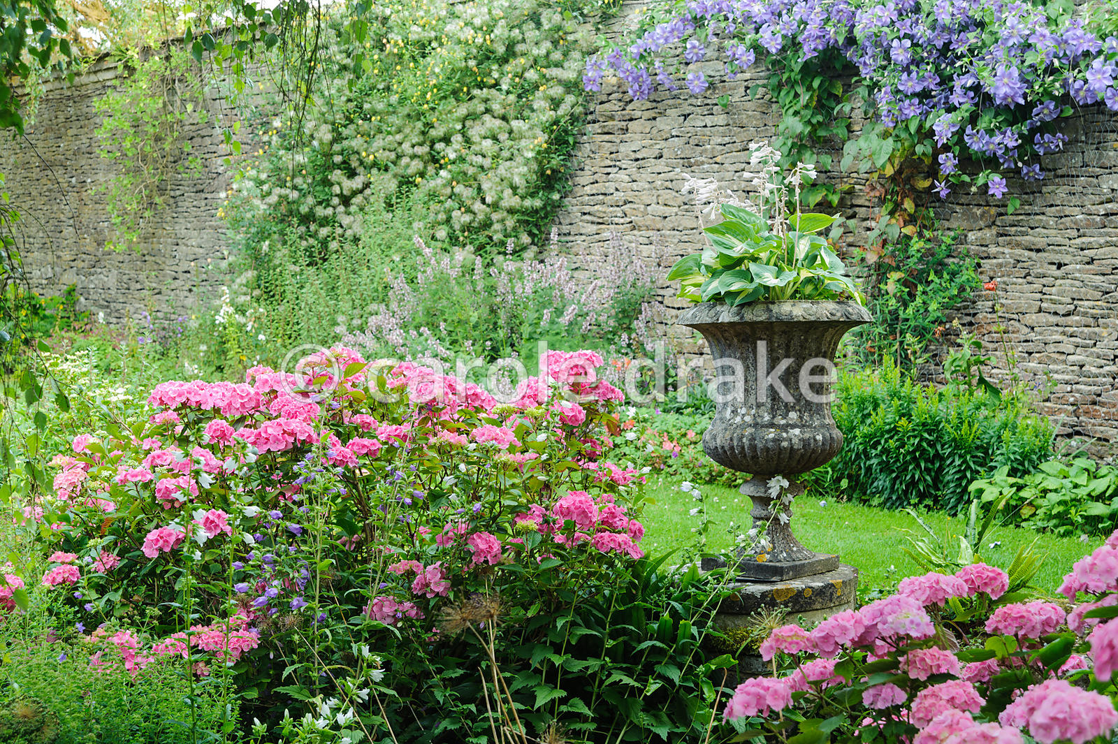 The Leisure Garden with pink hydrangeas, violet clematis and an urn with hosta. Rodmarton Manor, Rodmarton, Tetbury, Glos, UK