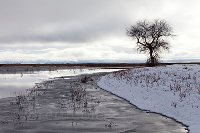Lone tree in winter in the starkly beautiful Lower Klamath NWR, California
