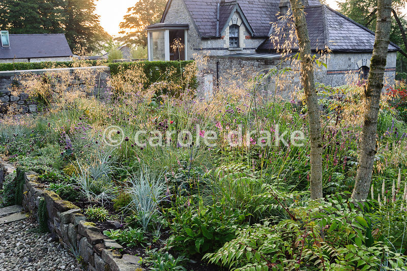 A mix of Stipa gigantea, Helictotrichon sempervirens, persicaria, Allium sphaerocephalon and Verbena bonariensis with former ...