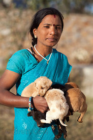 Staff at the Tree of Life for Animals rescue center in Pushkar, India care for stray and injured puppies