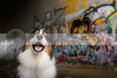 portrait of happy dog smiling in urban graffiti train tunnel
