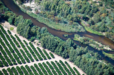 Aerial photograph of the Olifants River showing the intensive agriculture along its course, a threat to the endemic fish spec...