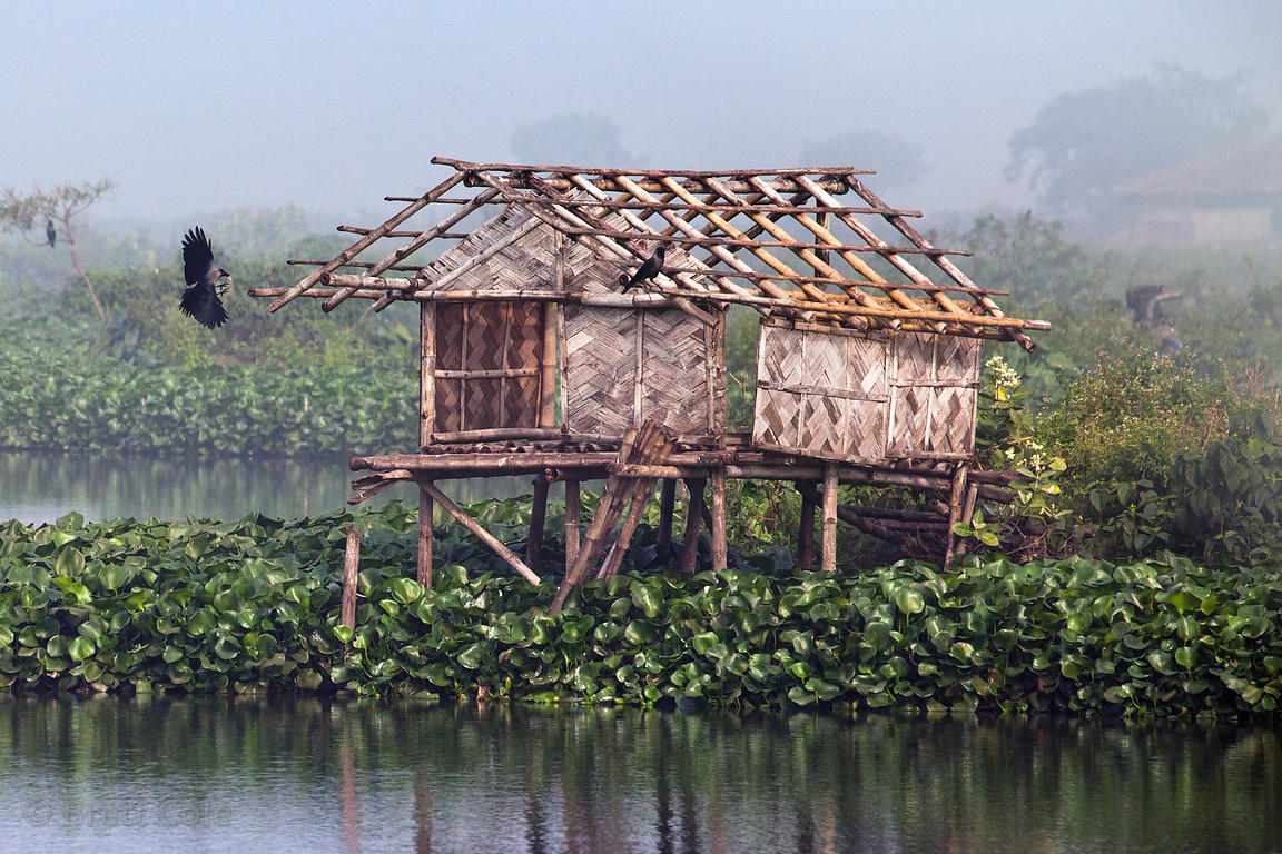 A crow lands on top of a fishing hut on a foggy morning in the East Kolkata Wetlands, Kolkata, India.