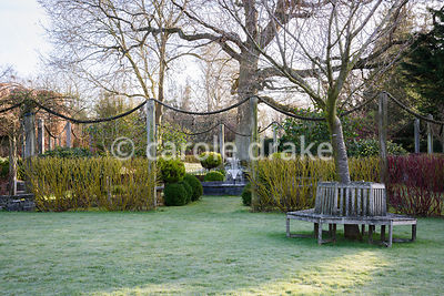 Tree seat with behind a cornus hedge surrounding the formal garden comprising red Cornus alba 'Sibirica' and yellow green Cor...