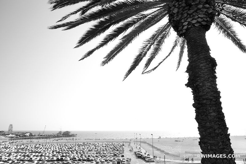 PALM TREE BEACH SANTA MONICA CALIFORNIA BLACK AND WHITE