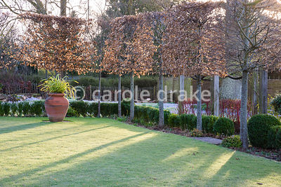 Pleached hornbeams around a lawn with urn containing Phormium tenax 'Yellow Wave' on a winter's morning at The Down House, Ha...