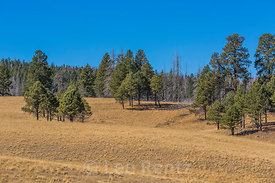 Ponderosa Pines and Grasslands in Valles Caldera National Preserve