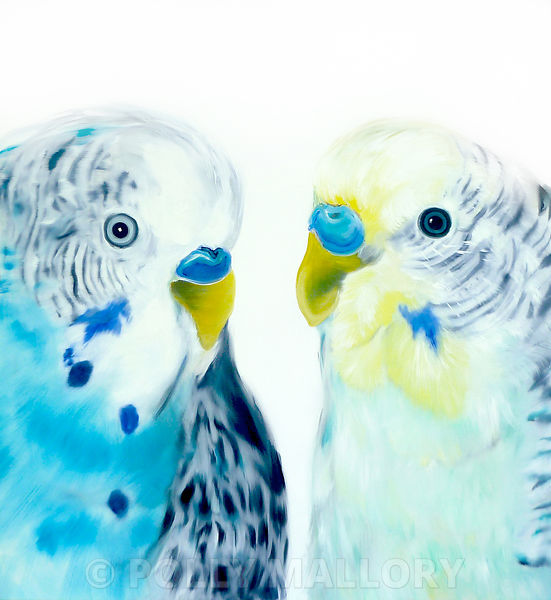 Two_Parakeets_52x48_copy