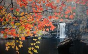 Little River Falls and Maple Tree