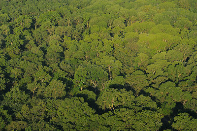 Aerial view over the Letea forest, Danube delta rewilding area, Romania, June 2012