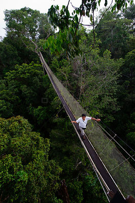 Aerial walkway through Rainforest canopy at Exploramo Lodge, Iquitos Region, Amazon, Peru