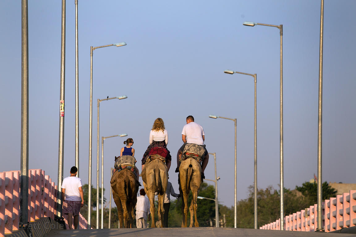 Tourists ride camels in Pushkar, Rajasthan, India