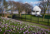 Crocuses and Bandstand in Vale Park