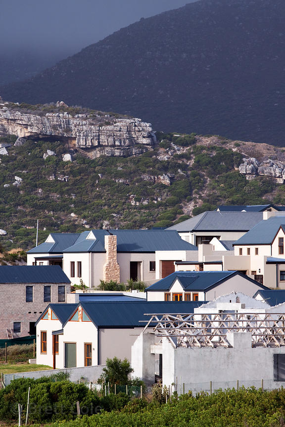 New housing development near Nordhoek, Southern Cape Peninsula, South Africa, in the middle of chacma baboon habitat. The bab...