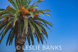 Palm Tree in San Diego, California