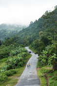 Road running through Ranomafana National Park, Madagascar