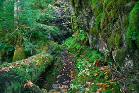Shady Lane Trail in Olympic National Park