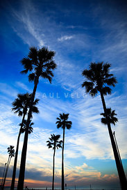 Palm Trees Newport Beach Photo