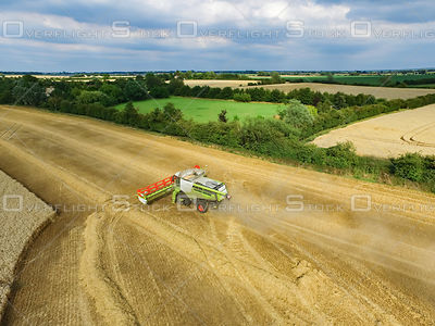 Harvesting Wheat at Waterbeach Cambridgeshire England UK