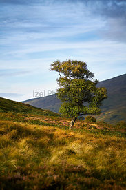 A tree bathed in the evening sun on the Northumerland Moors.