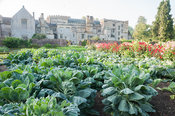Orderly rows of vegetables and ornamentals in the walled kitchen garden with backdrop of historic Forde Abbey, nr Chard, Dors...