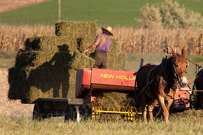 A group of Amish farmers bail hay using only horses, no motors, Amish country, Lancaster, Pennsylvania