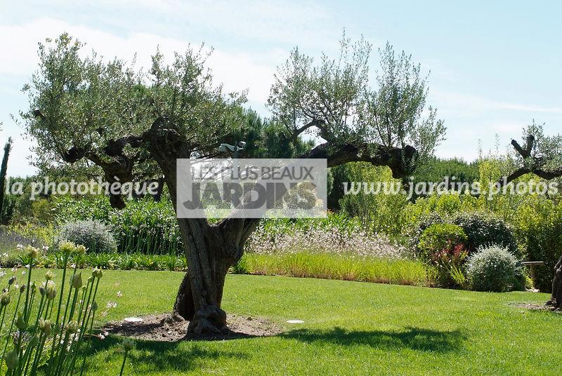 La Phototheque Les Plus Beaux Jardins Jardin Mediterraneen