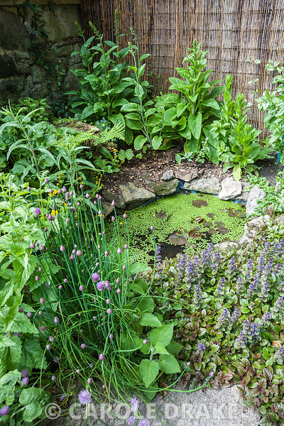 A pond is an important part of any wildlife garden, here surrounded by marsh marigold, bugle, chives and foxgloves.