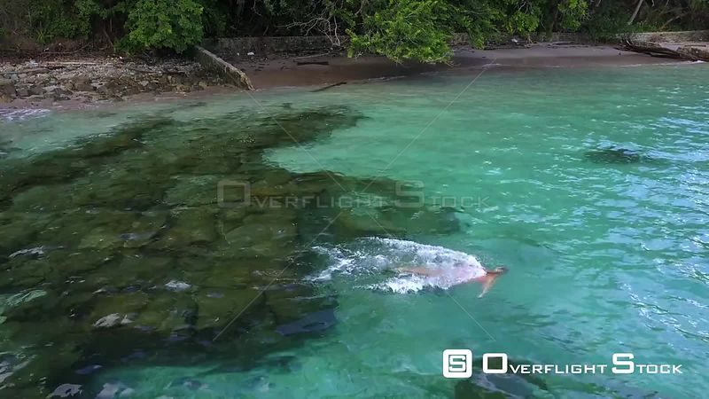 Woman Swimming in the Aquamarine Ocean on Vacation in Panama